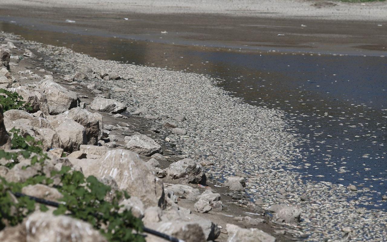 Bursa'da çevre felaketi! Binlerce balık telef oldu