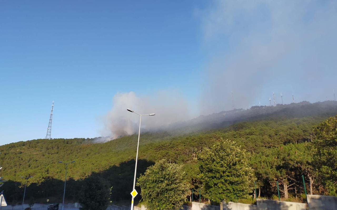Maltepe'de ikinci yangın paniği orman alevlere teslim oldu