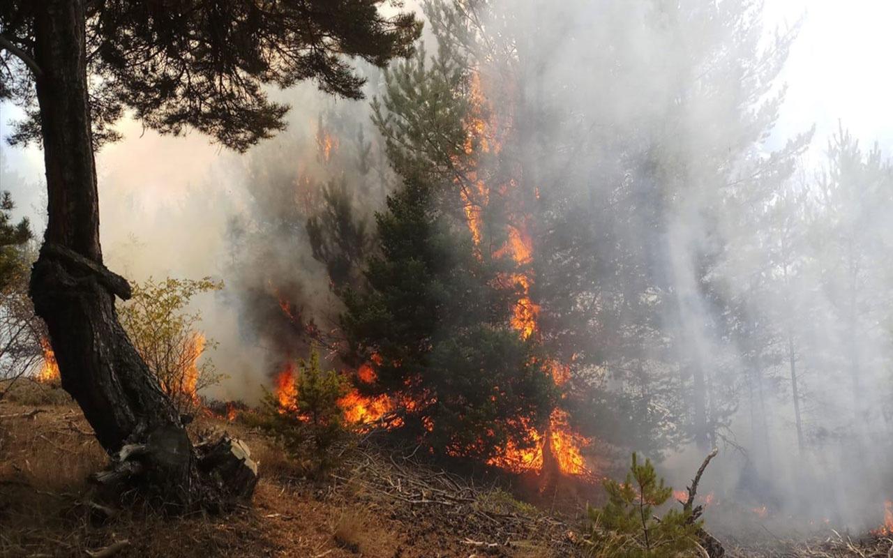 Amasya'da orman yangını! Alevlere müdahale ediliyor