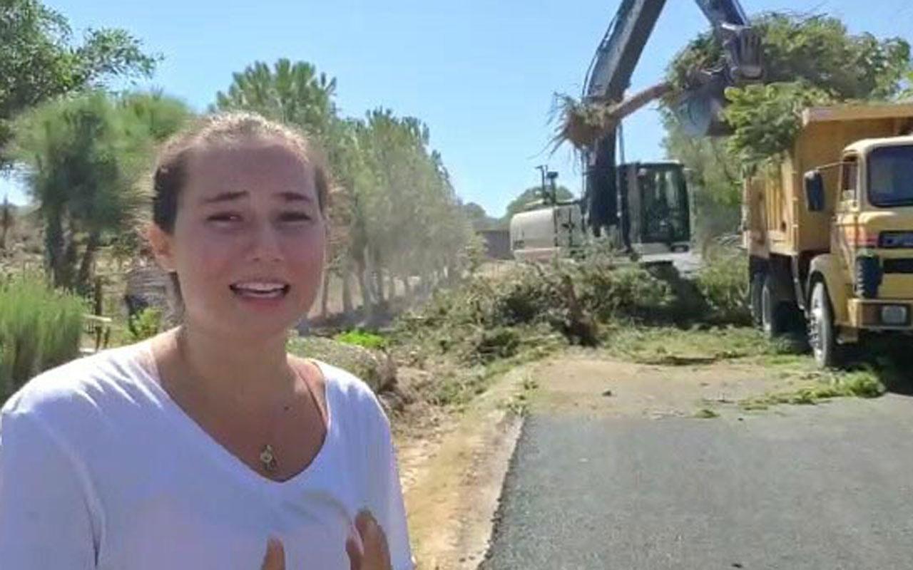 CHP'li belediyenin ağaç katliamını gözyaşlarıyla anlattı