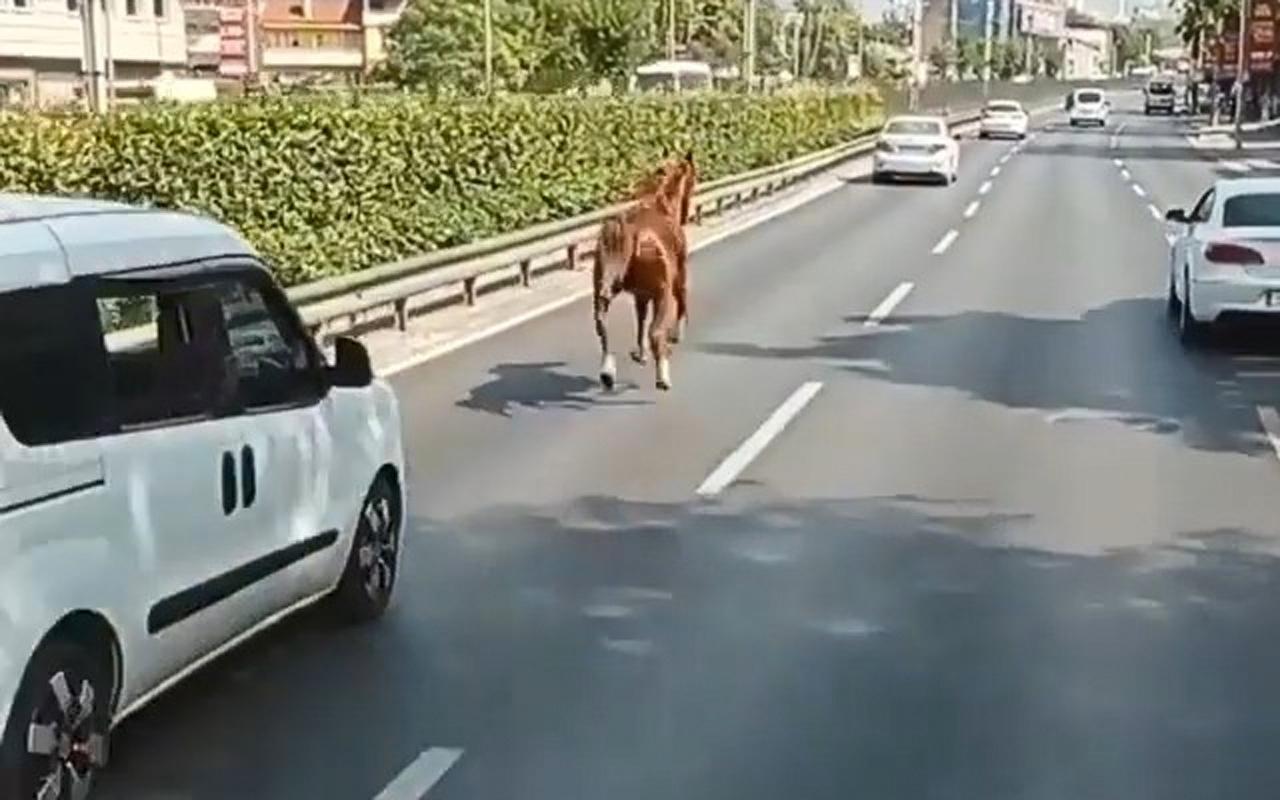 Bursa'da kara yolunda dört nala koşan başı boş at araçlarla yarıştı