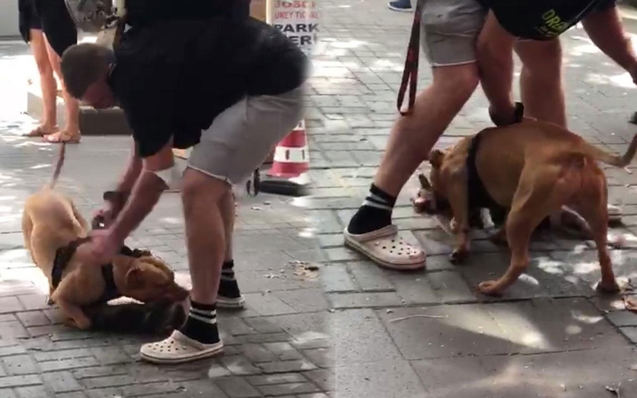 İstanbul'un göbeğinde pitbull dehşeti kamerada! 'Köpeği vurun'