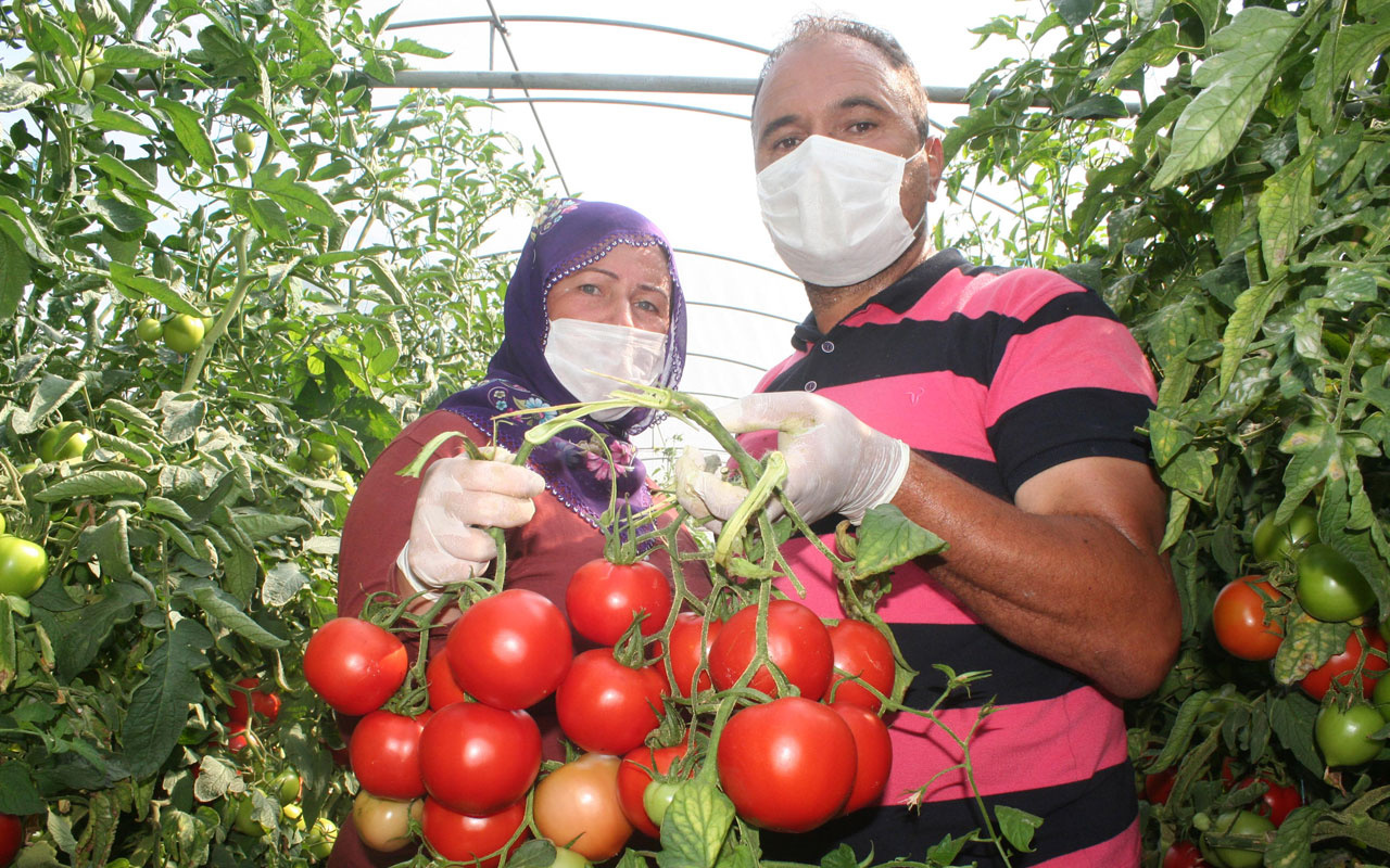 Tarlada 40 kuruş olan domatesin markette 4 lira olmasına üreticiden tepki