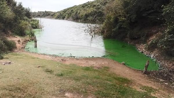 İstanbul'da tüyler ürperten görüntü Eyüpsultan Gölü'ne bunu yaptılar