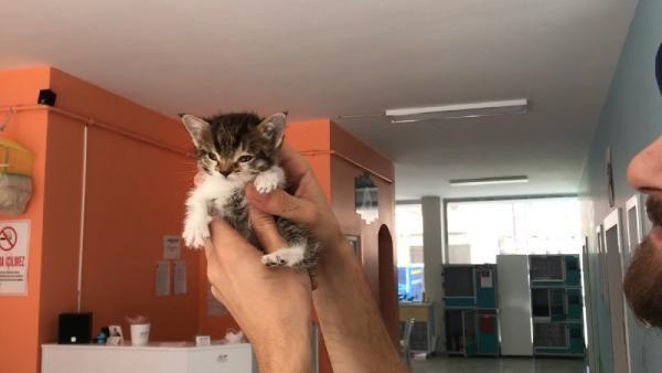 Gerçek veterinerde ortaya çıktı! Bu kediden Türkiye'de sadece 1 tane var