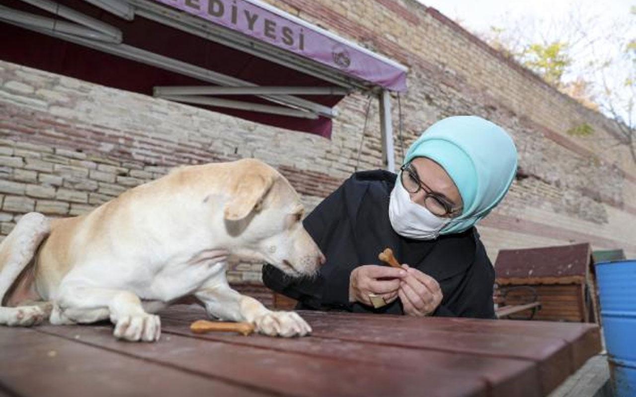 """Emine Erdoğan """"Leblebi"""" isimli engelli köpeği sahiplendi"""