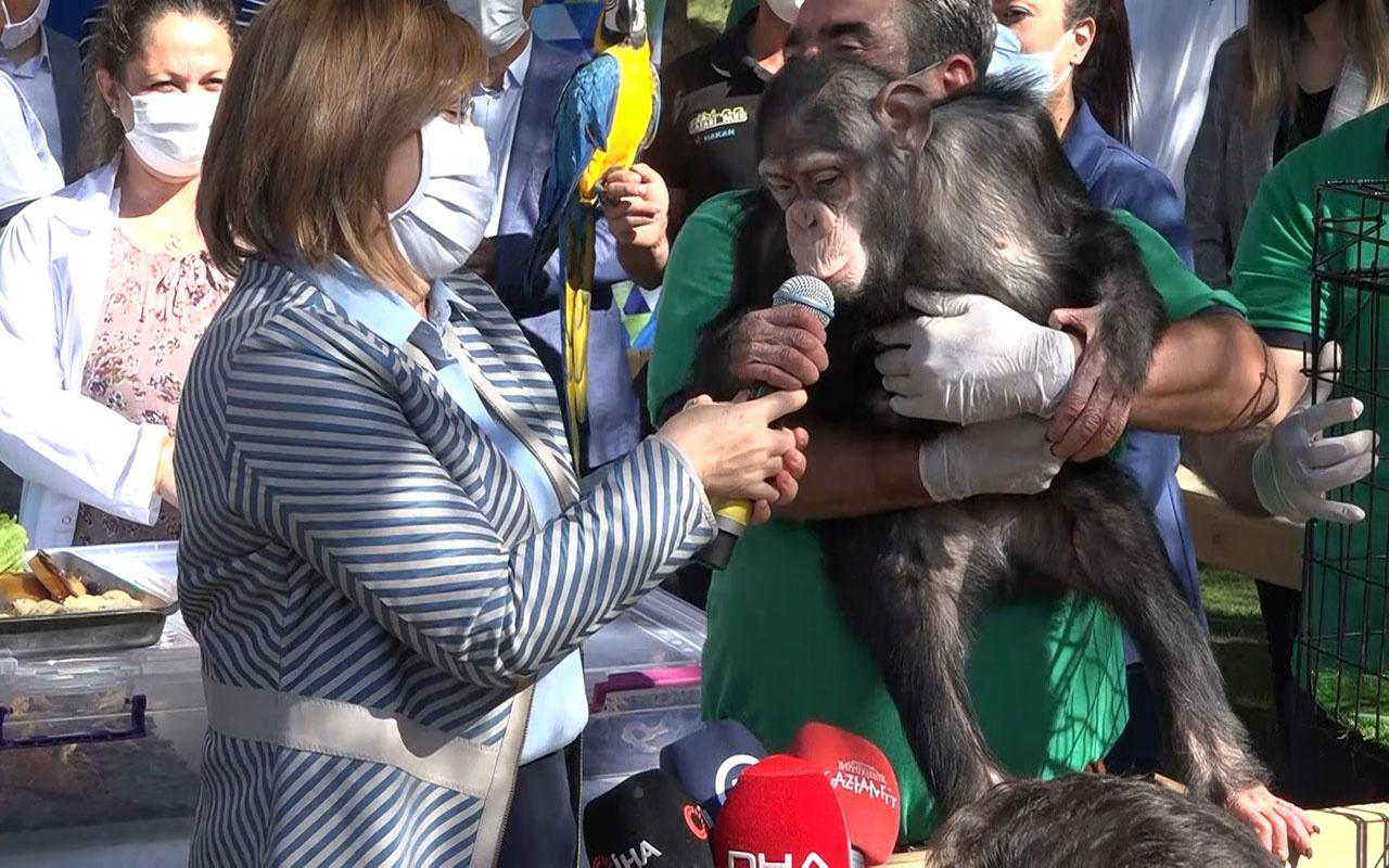 Gaziantep Büyükşehir Belediye Başkanı Fatma Şahin'e maymun şoku! Taşla saldırdı
