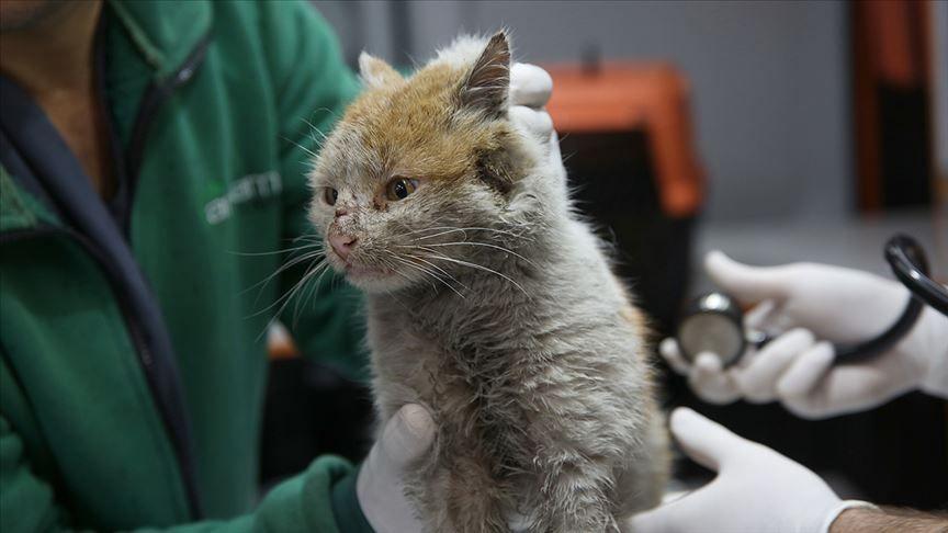 Muhittin Böcek'in talimatıyla sahiplenilmişti! İşte depremzede kedi Toros'un son hali