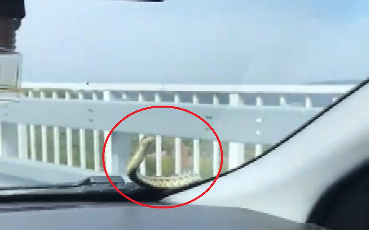 Seyir halindeki arabada yılan! Bursa'da arandı 3 gün sonra İzmir'de çıkarıldı