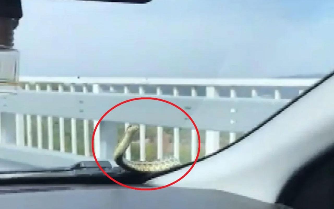 Bursa'da arabada giderken yılanla göz göze geldi araç sahibi o anları kaydetti