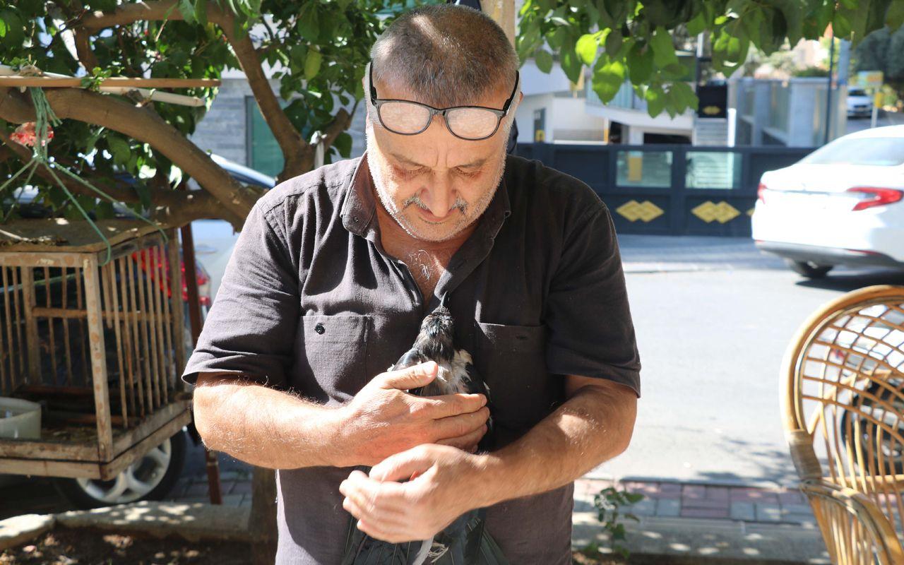 Antalya'da duyan kulaklarına inanamıyor! Karga kedi gibi ses çıkarıyor