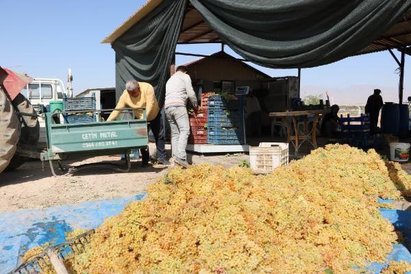 Niğde'de üzümden köfter yaptılar talep yağıyor yurt dışına satıyorlar