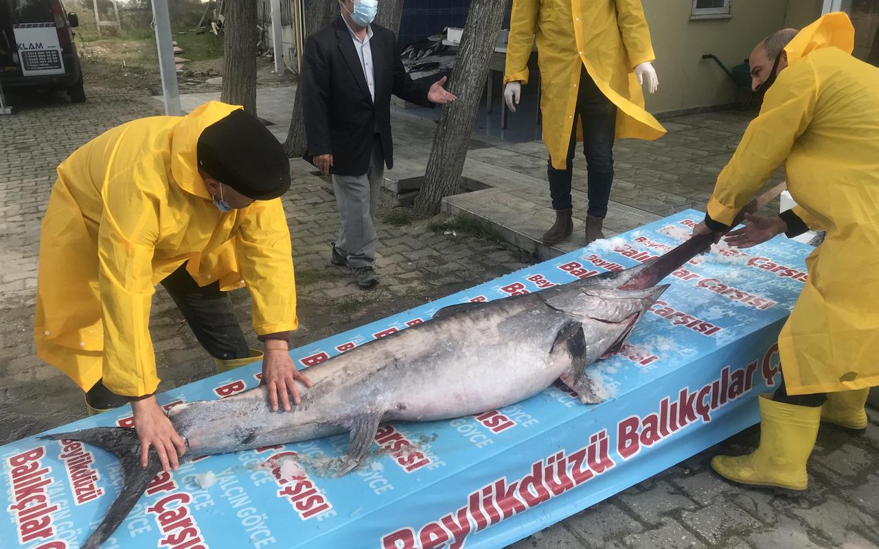 Marmara Denizi açıklarında yakalandı! Boyu tam 3 metre