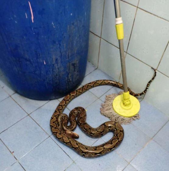 Tuvaletini yapan kadın hayatının şokunu yaşadı! 2 metrelik yılan ısırdı