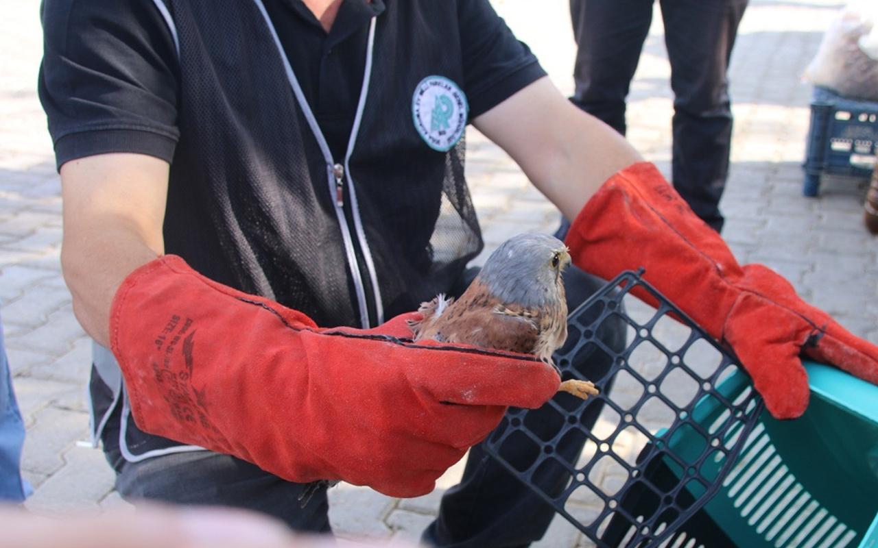 Adana'da pazarcının kediden kurtardığı kuş bakın ne çıktı! Nesli tükeniyor