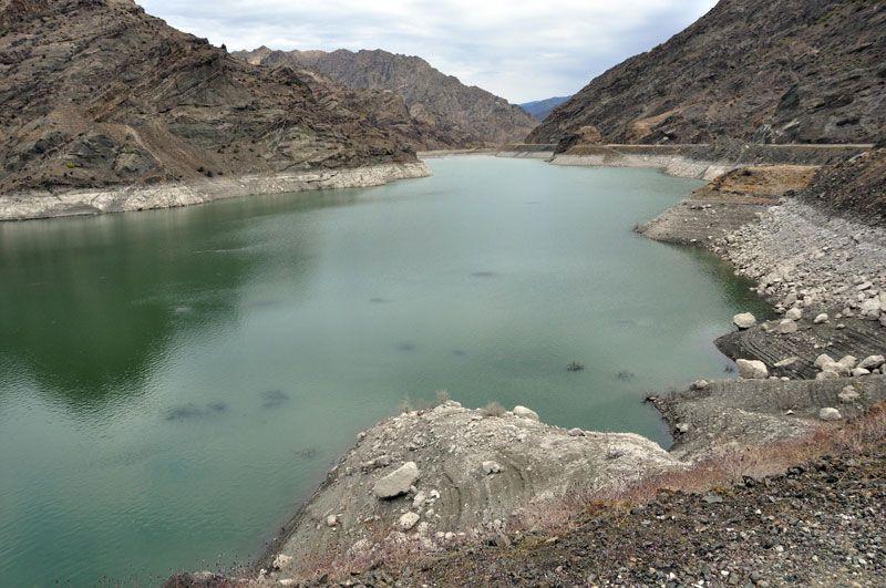 Erzurum'da baraj gölündeki balıkların kümeler halinde durmasının nedeni ortaya çıktı