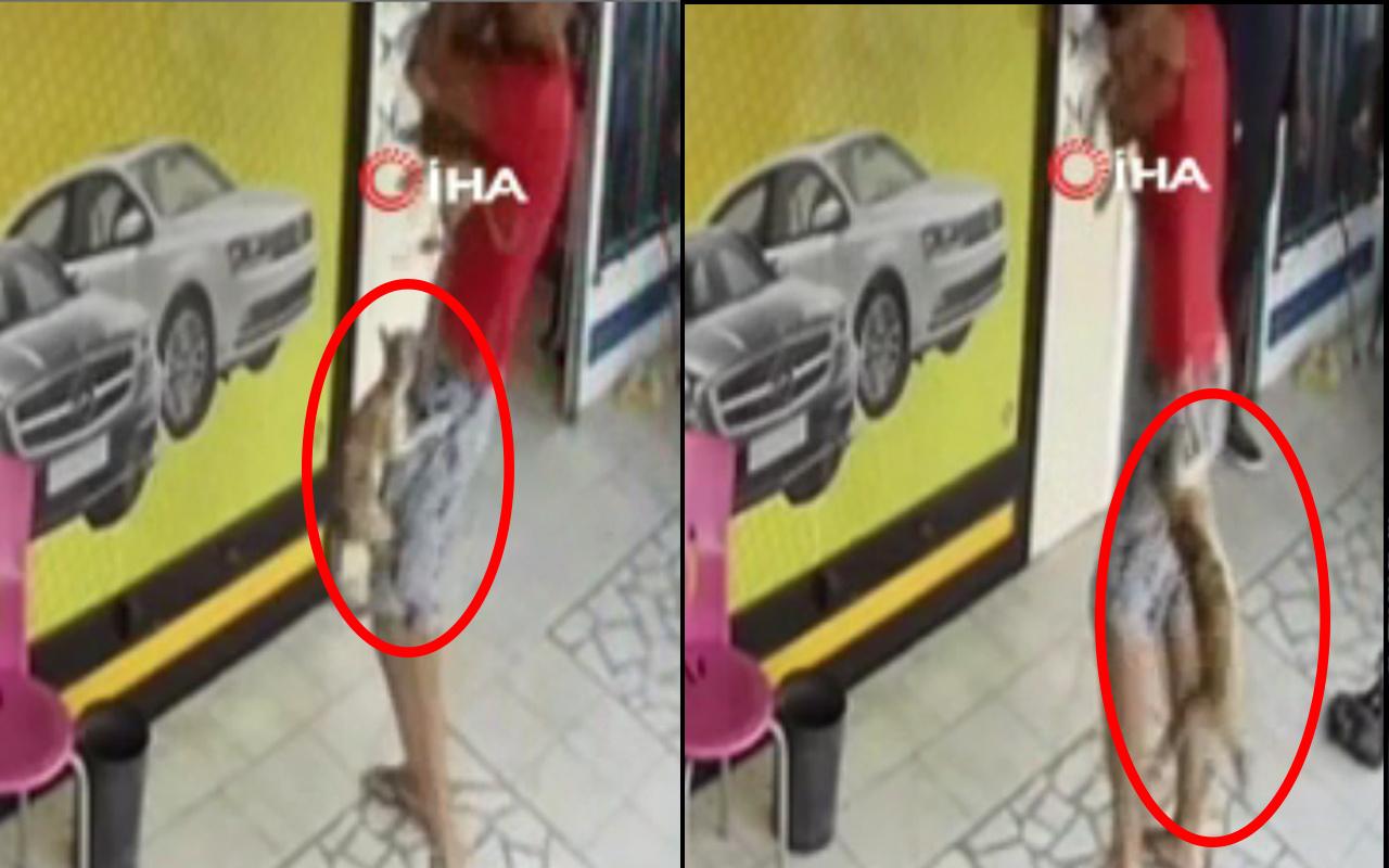 Mersin'de köpeğiyle gezerken kedinin hışmına uğradı! Neye uğradığını şaşırdı
