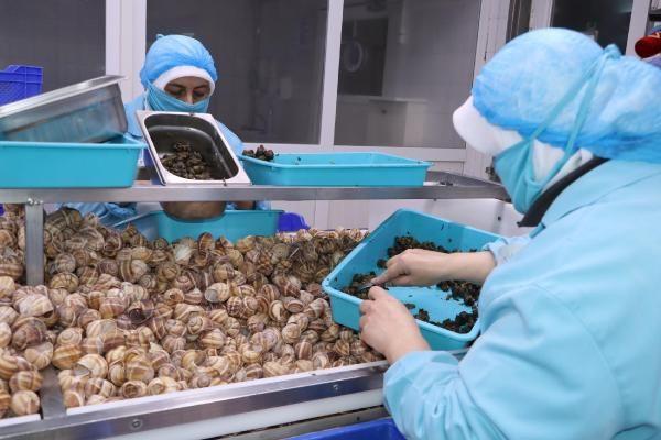 Bilecik'te yapılıyor dünyaya ihraç ediliyor! Porsiyonu 750 TL