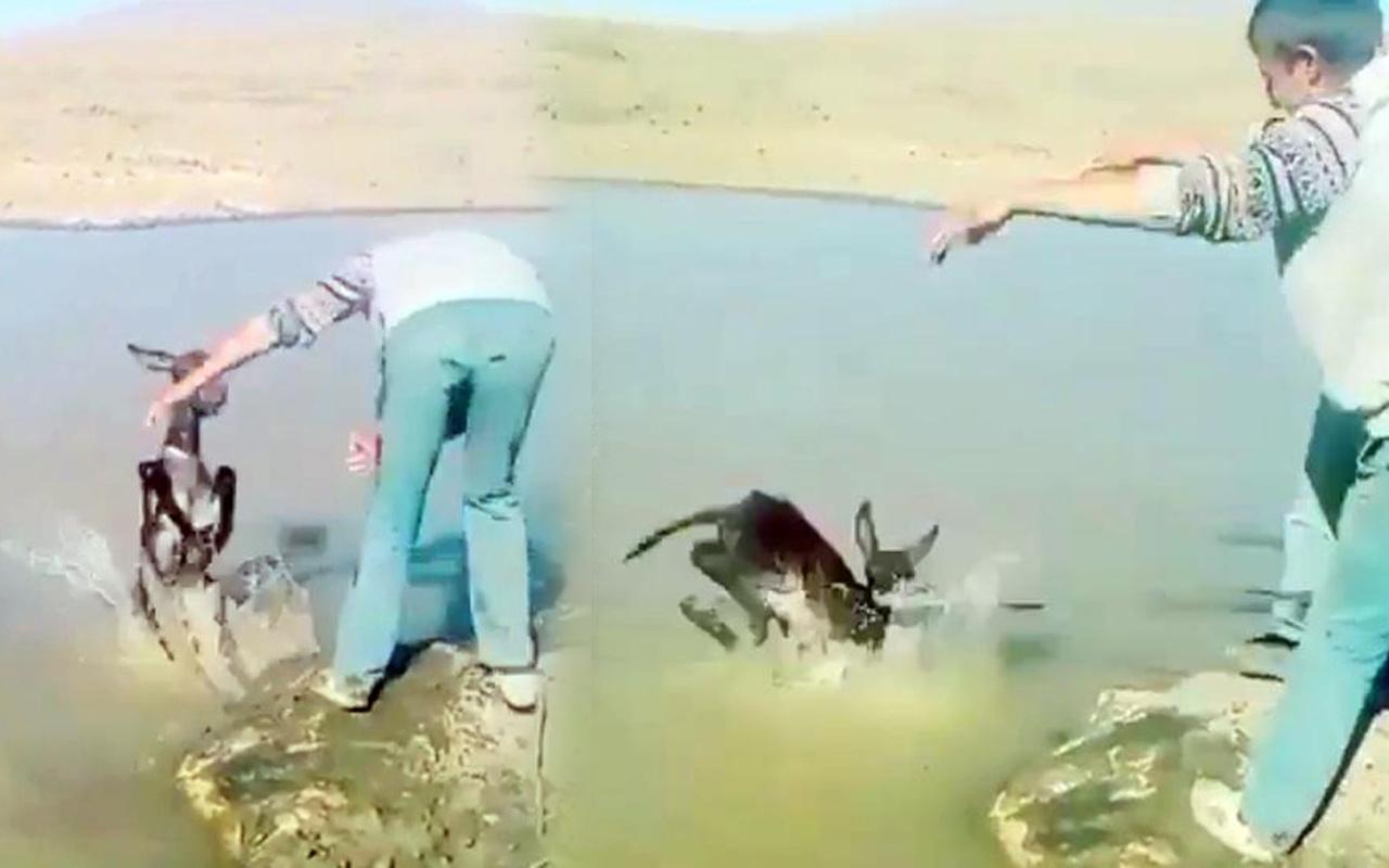 Kars'ta yavru eşeğin boynuna ip bağlayıp göle attılar! Cezaları belli oldu