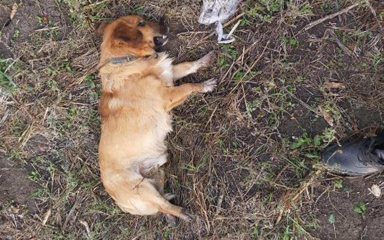 Bursa'da vahşet! Kümesten yumurta çalan köpeği tüfekle vurarak öldürdü