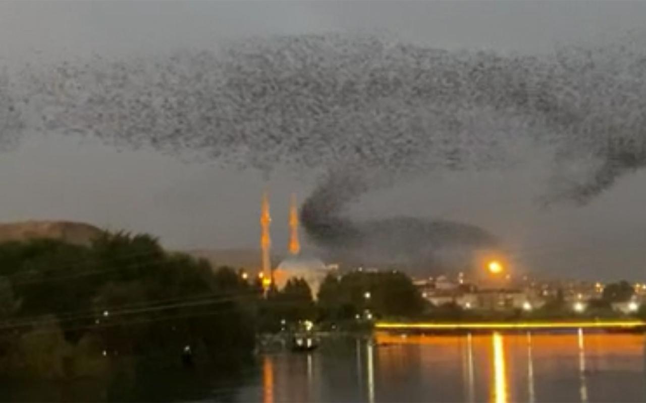 Nevşehir'de sığırcıkların kandil gösterisi