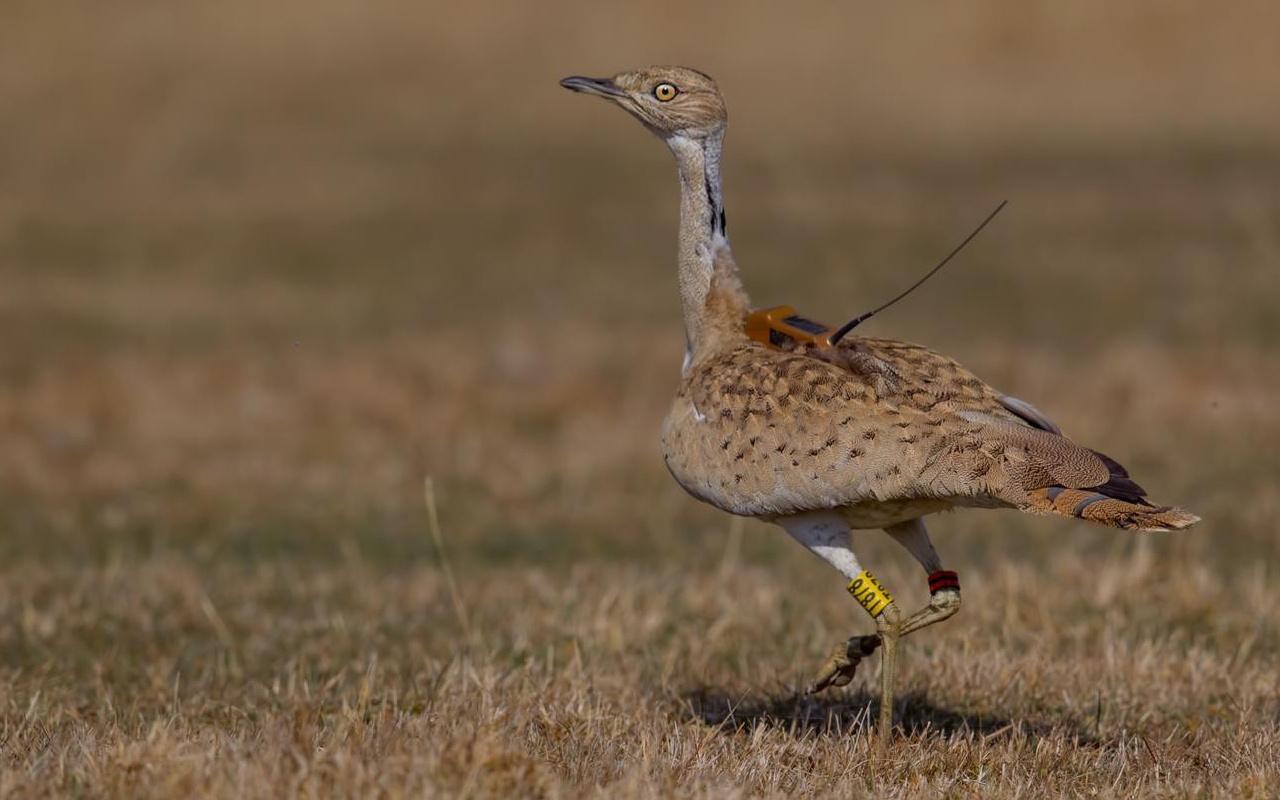 Türkiye'de görüldü! İlk kez böyle bir kuş türüyle karşılaştılar