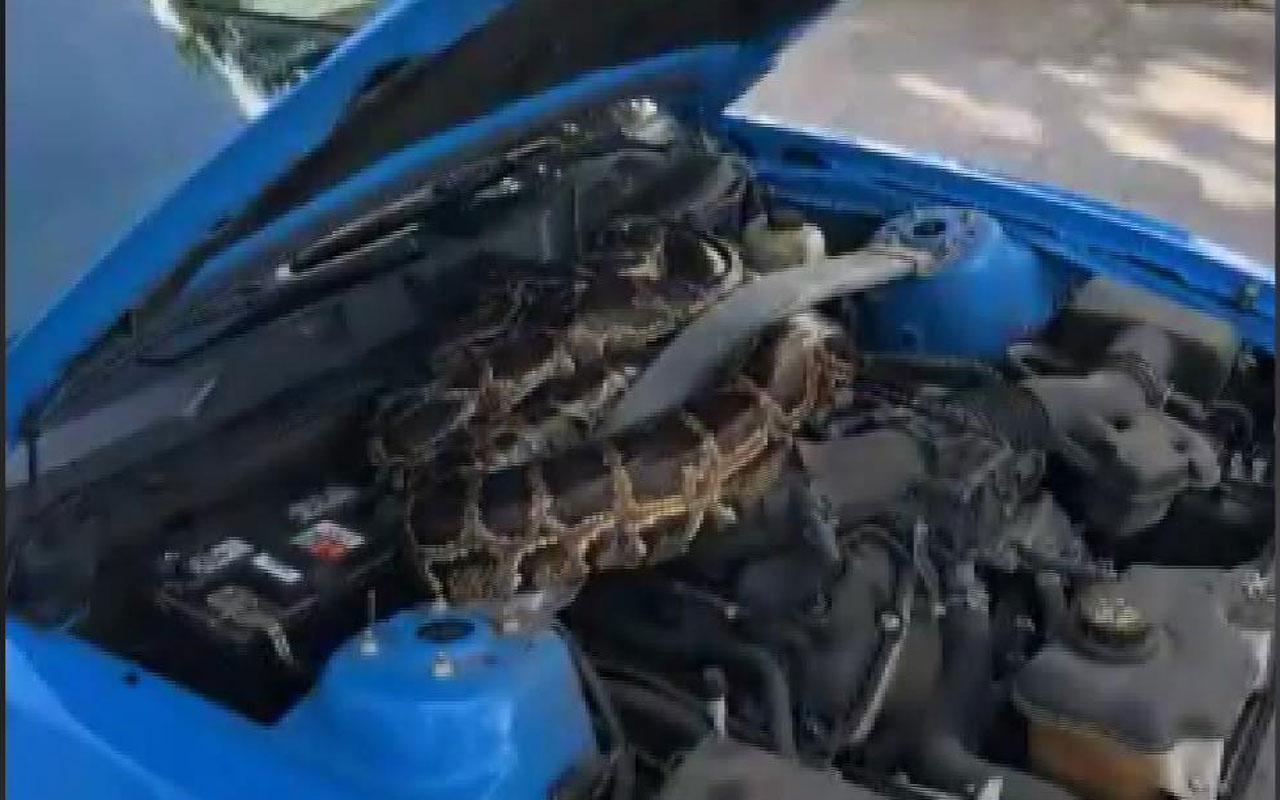 ABD'de lüks aracın kaputundan 3 metrelik dev piton çıktı
