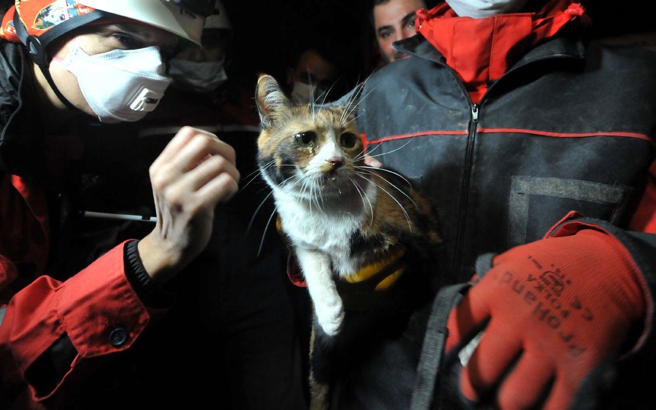 İzmir'de sevimli kediyi dostu kurtardı gözyaşları yaşadığı büyük korkuyu özetledi