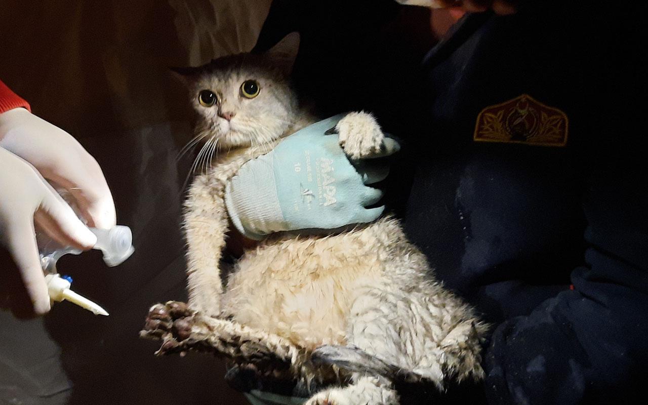 İzmir'de 21 kişinin arandığı yıkılan Emrah Apartmanı'ndan kedi kurtarıldı