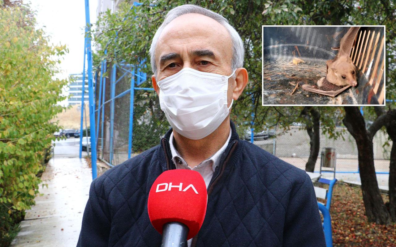 Prof. Albayrak Mersin'de görülen vampir yarasaya dair konuştu: Koronavirüs ile ilgisi yok