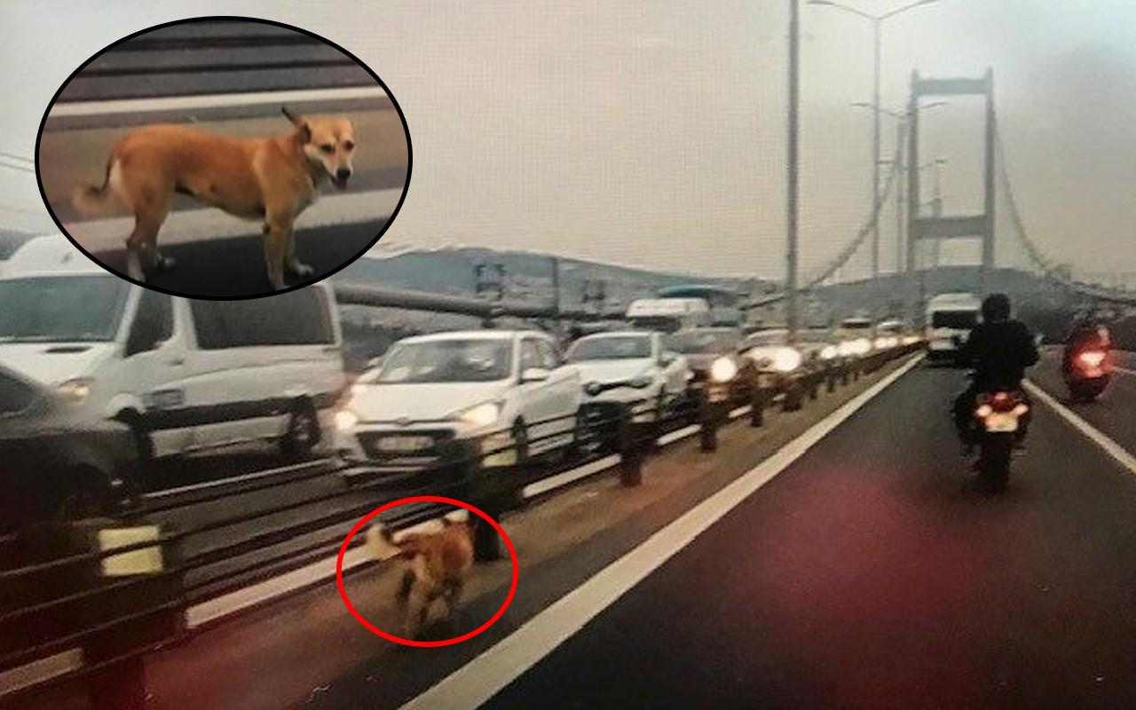 İstanbul'da köprüde şaşkına çeviren manzara! Escort eşliğinde karşıya geçti
