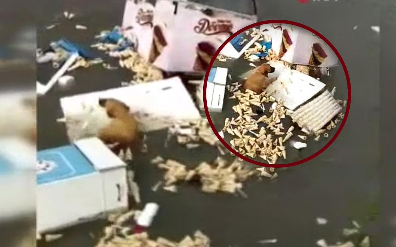 İzmir'de tsunamide hayatta kalmaya çalıştı! Köpeğin zor anları kamerada