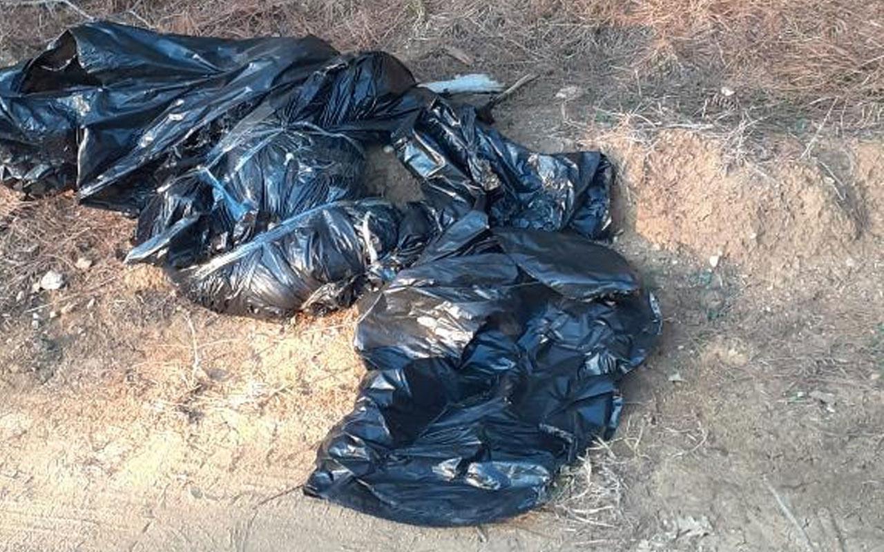 Edirne'de vahşet! Ormana atılmış çöp poşetinde ölmüş köpek bulundu