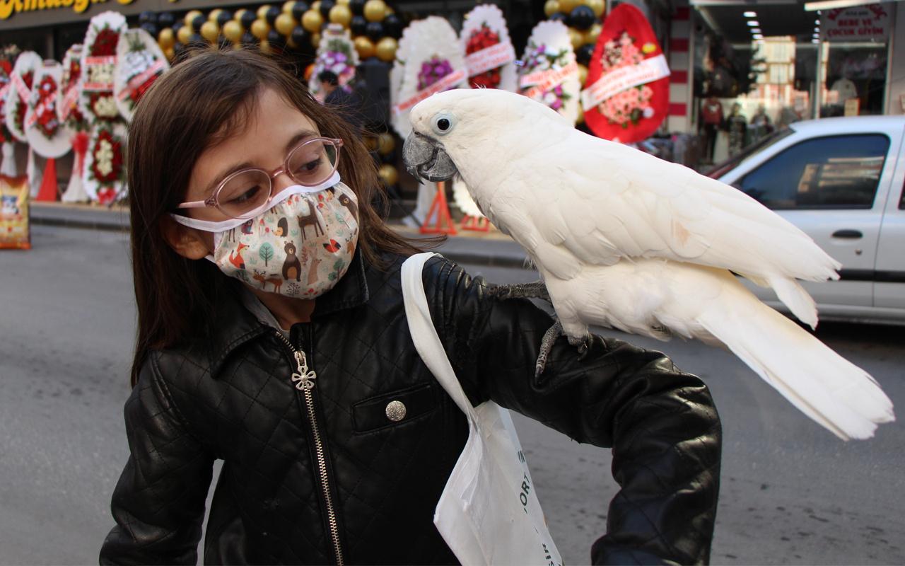 Amasya'da gören herkes fotoğraf çektiriyor! Bu papağanın fiyatını duyan şok oldu