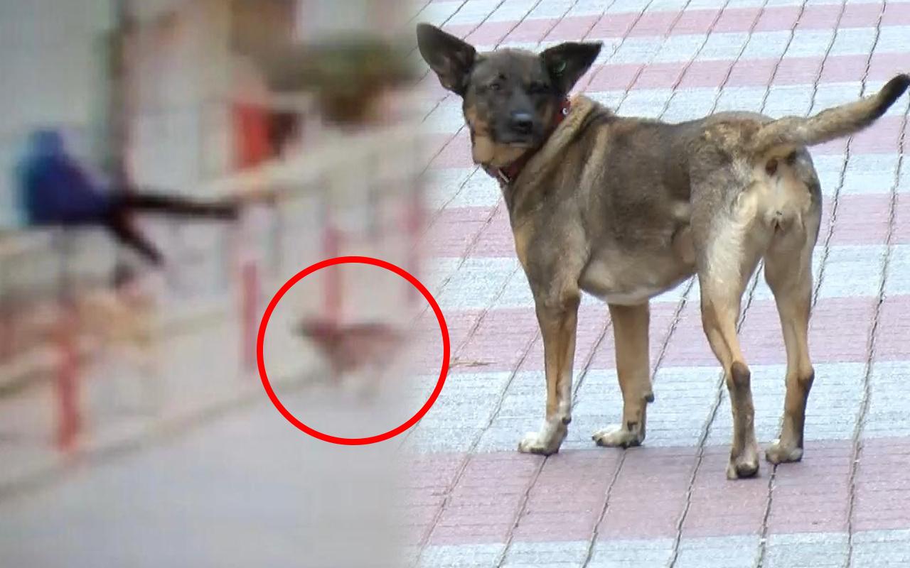 İstanbul'da korkunç görüntü! Köpekten kaçarken metrelerce yüksekten düştü