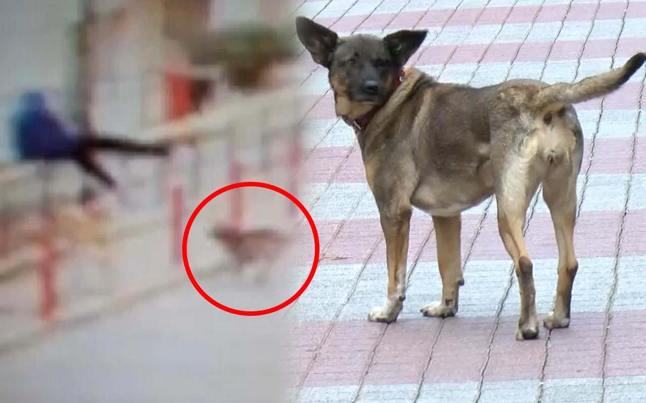 İstanbul'da köpekten kaçarken metrelerce yüksekten düştü