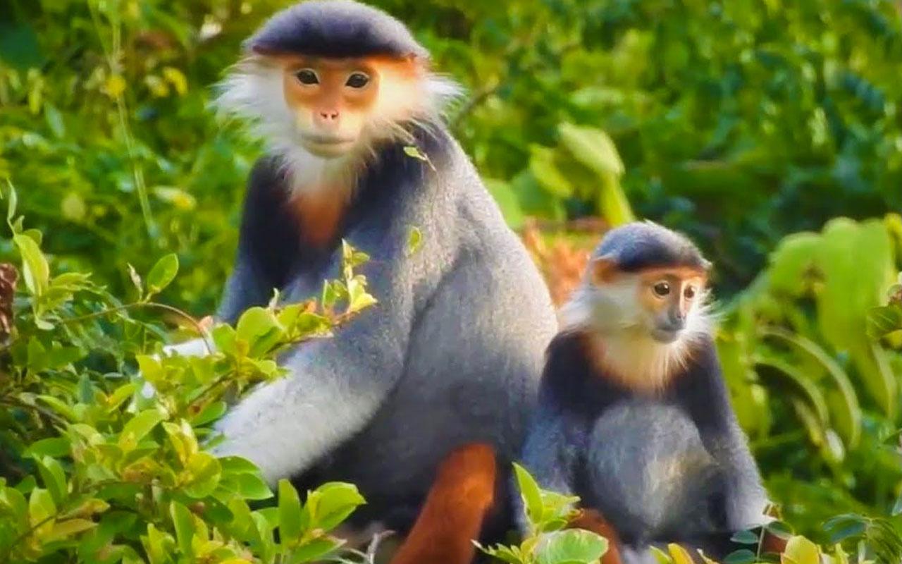 Novavax'tan aşı açıklaması: Maymunlar üzerinde başarı sağlandı