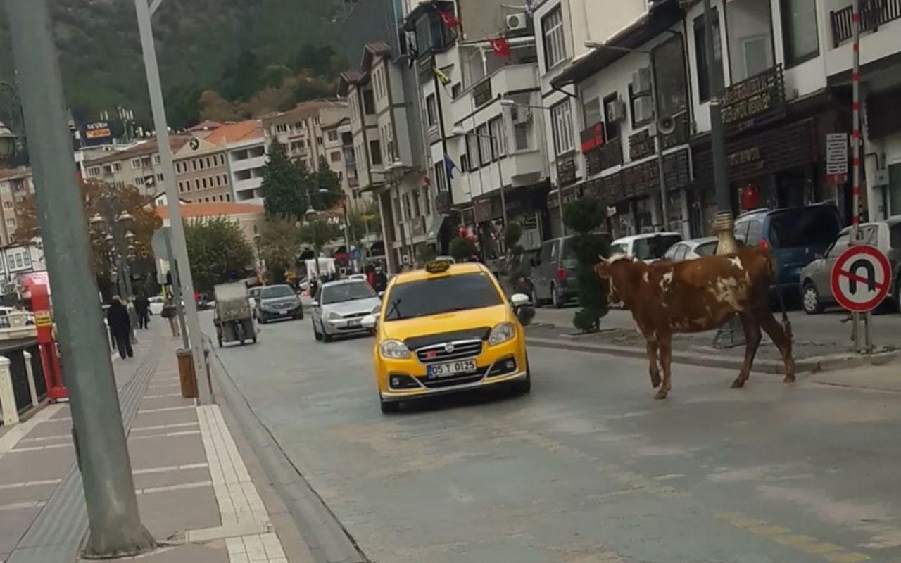 Amasya'da boğa sahibinden kaçıp trafiği birbirine kattı! İşte o anlar