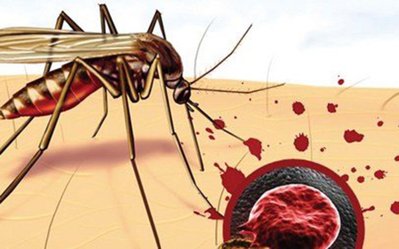 Dünya koronavirüsü konuşuyor ancak sıtma nedeniyle 1 yılda 409 bin kişi öldü!