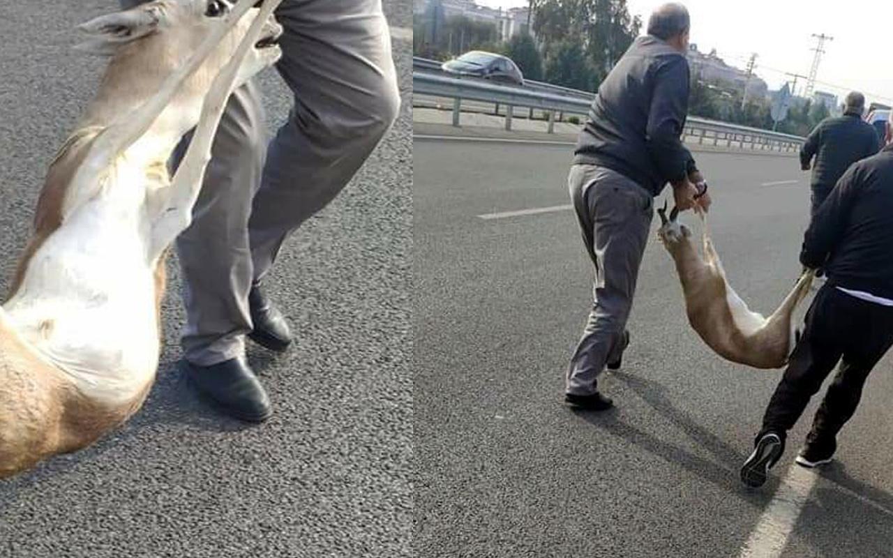 İzmir'de 'veteriner' yalanıyla yaralı ceylanı götürenlere 24 bin lira ceza