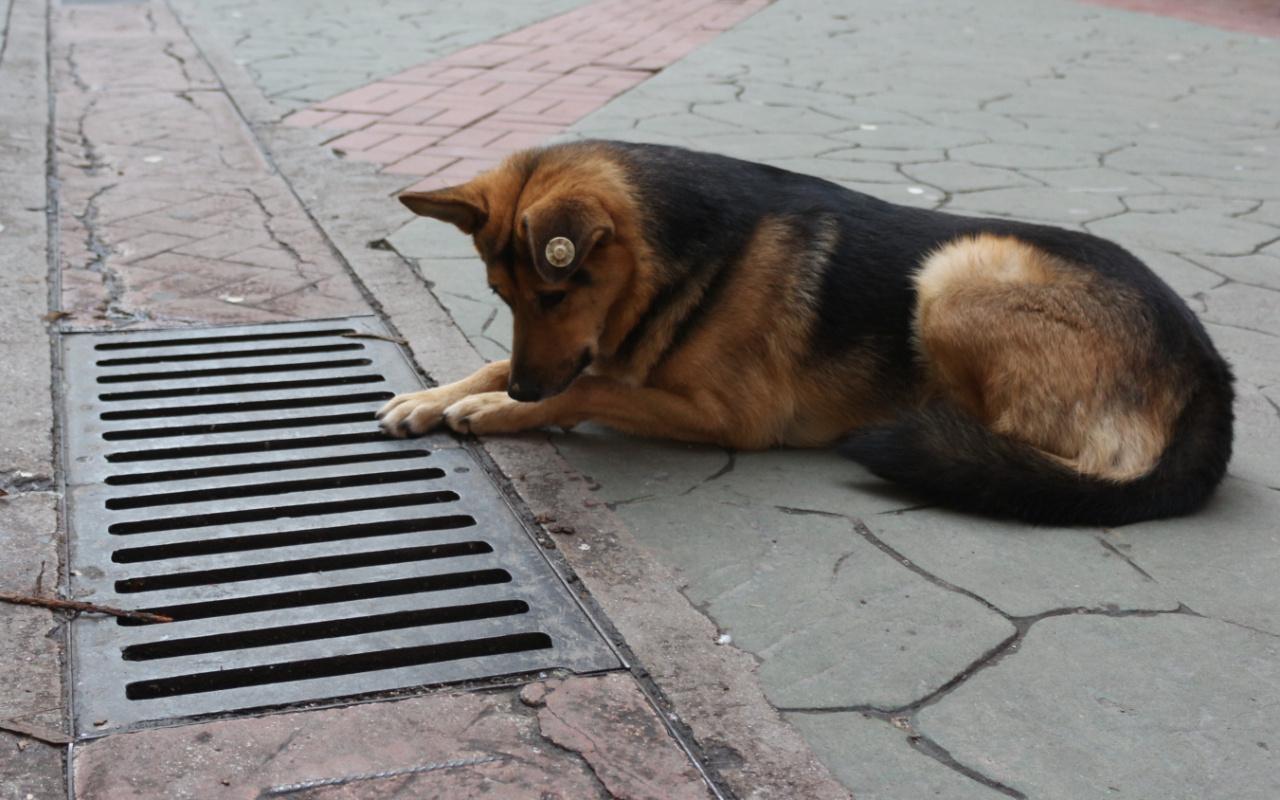 Kocaeli'de bu köpek fenomen haline geldi! Her gün aynı yere bakıyor
