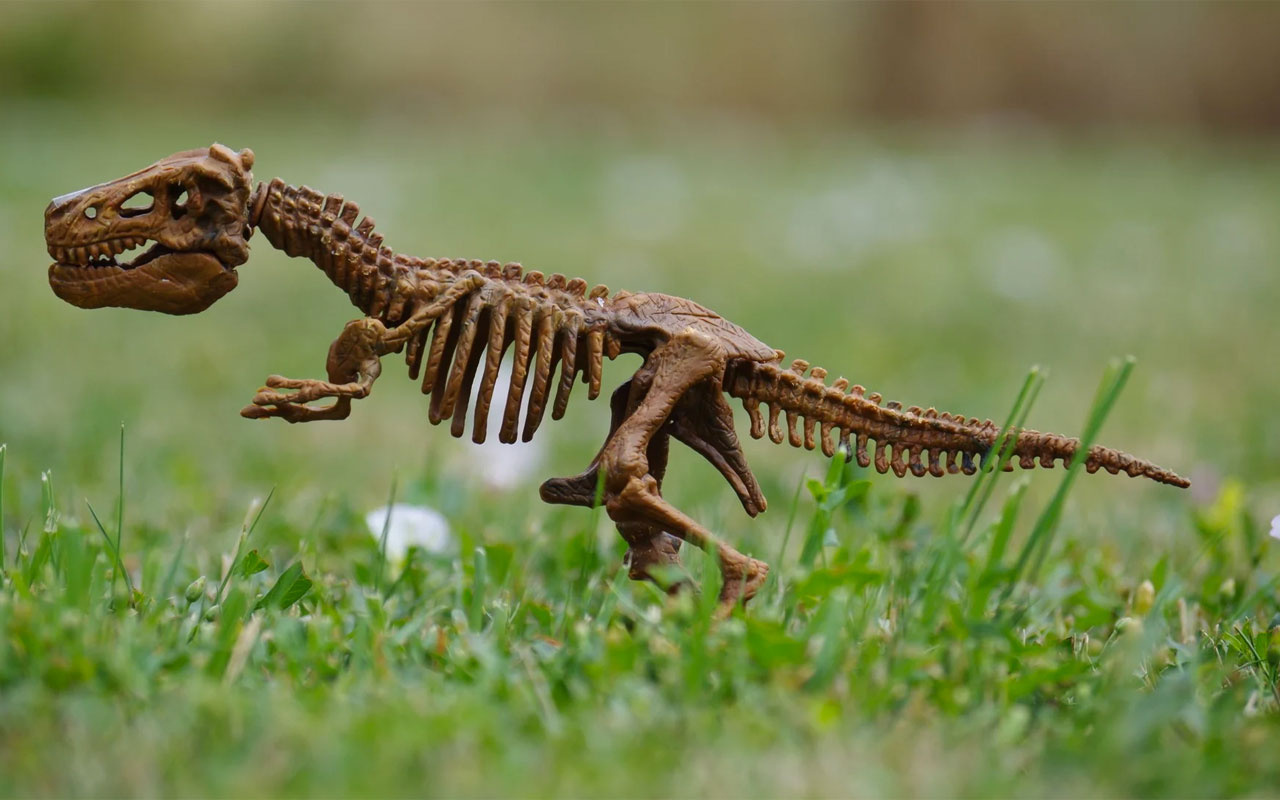 Tavuk boyutunda yeni bir dinozor türü keşfedildi