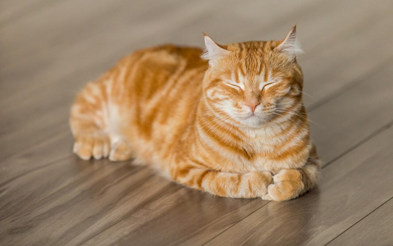 Kedilerin koronavirüsü iki günde yendiği ortaya çıktı