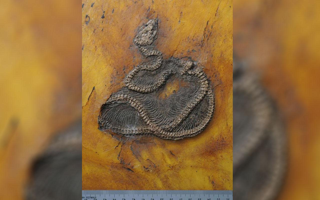 İki ülkenin bilim insanları şaşkın! Dünyanın en eski piton yılanının kalıntıları keşfedildi