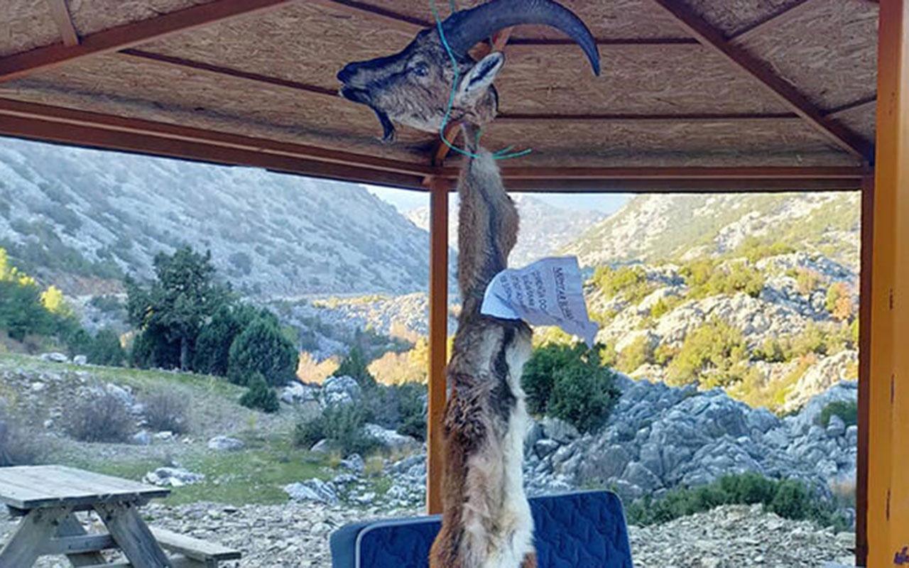 Kaçak avcılar muhtarı böyle tehdit etti! Dağ keçisi postunda 'ayağını denk al' notu
