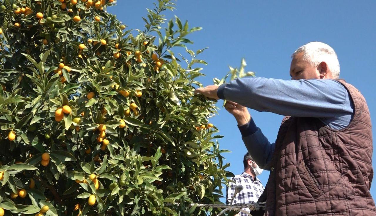 Antalya'da salgınla birlikte talep patladı bağışıklığı güçlendiriyor! Fiyatı duyanları şaşırttı