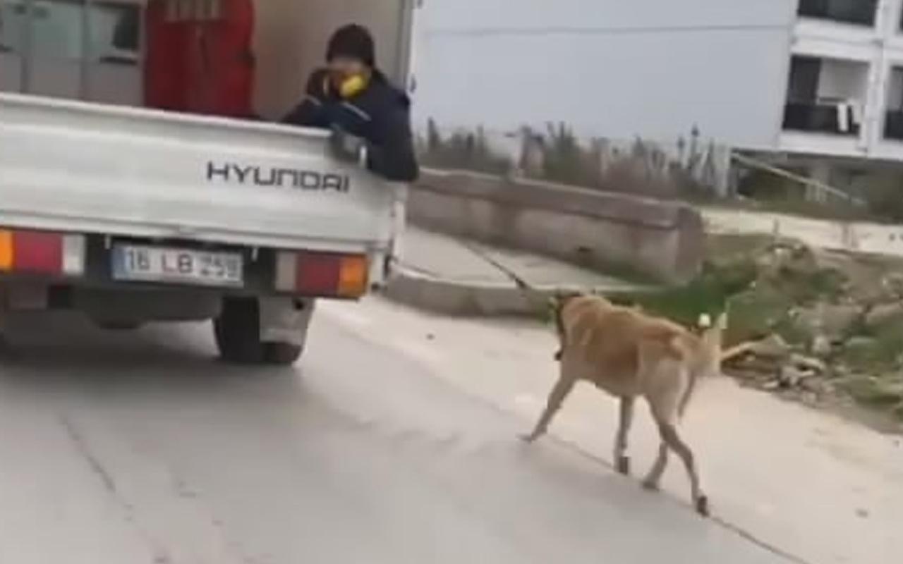 Bursa'da köpeği sürükledi! Vicdansız sürücü bakın ne ceza aldı