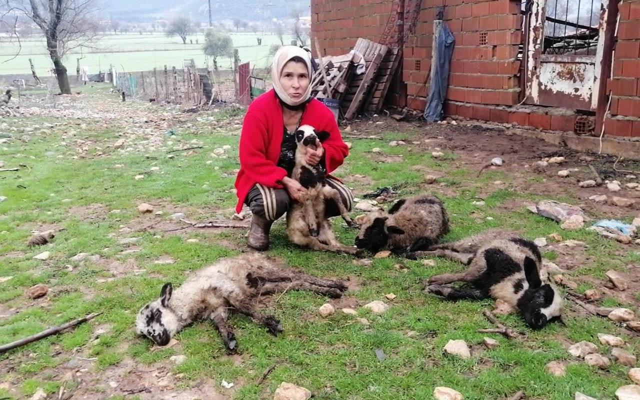 Muğla'da yılın son günü hayatlarının şokunu yaşadılar!