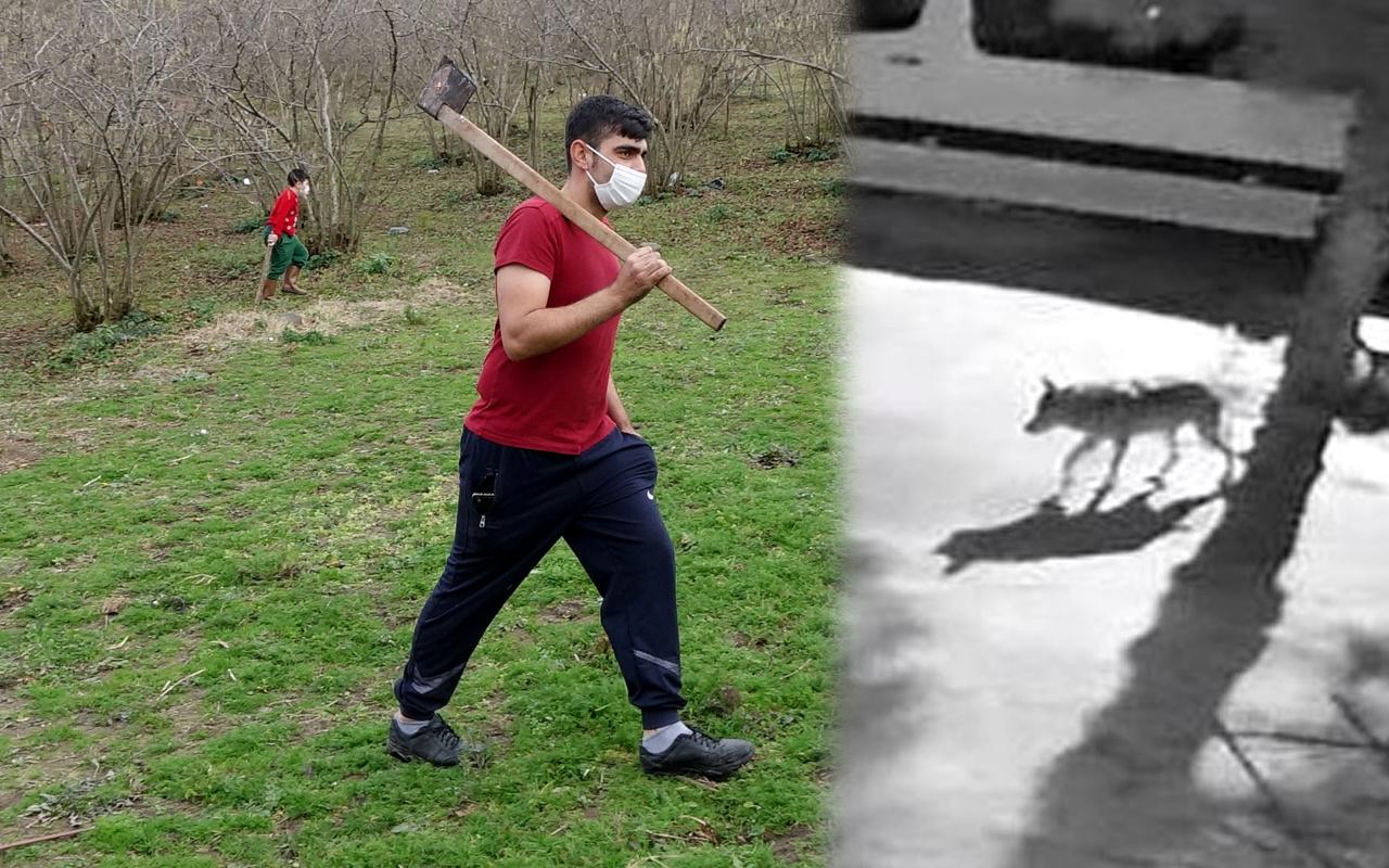 Giresun'da aç kalan kurtlar mahalleye indi vatandaş sopalı baltalı nöbete başladı