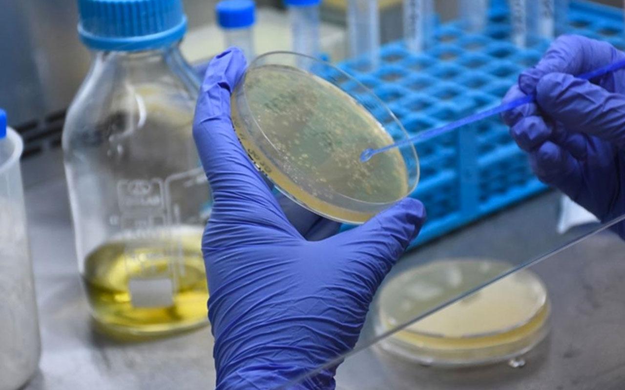 Türkiye'nin koronavirüse karşı geliştirdiği ilk 'mRNA' aşısında tarih belli oldu!